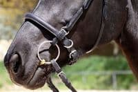 Barefoot 'Shape It' Noseband